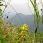 Flora y fauna en Las Estacas de Trueba