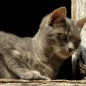 Gatuco.Fuentona de Ruente (12)